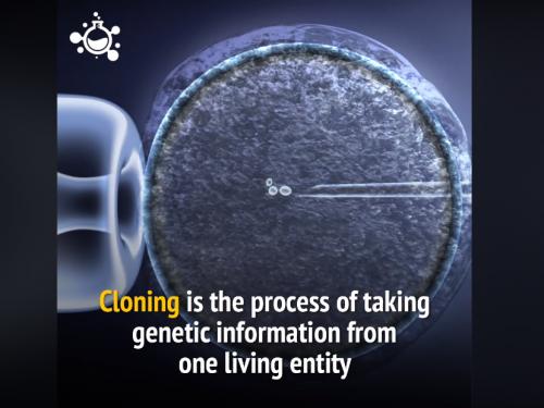 Come funziona la clonazione?