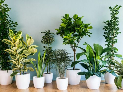 Quali sono le migliori piante da tenere in casa?