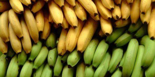 Qual è la differenza tra banana e platano?