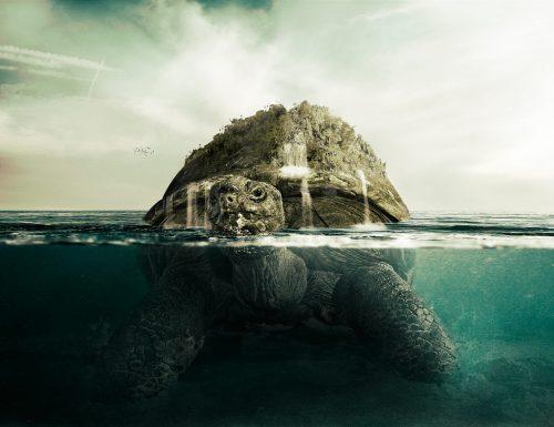 Ecco la tartaruga più grande del mondo: la tartaruga liuto