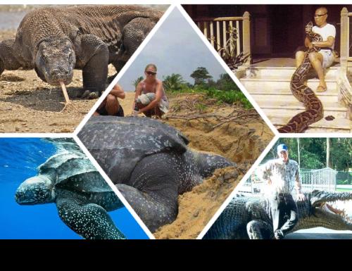 I rettili più grandi del mondo